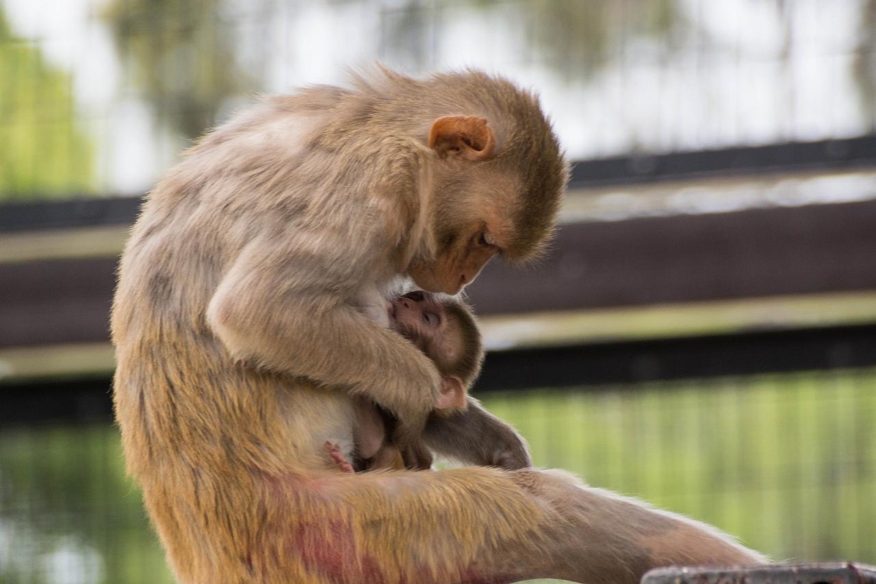 サルの赤ちゃん